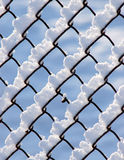 Snow Covered Fence. Snow piled on the wires of a chain link fence Royalty Free Stock Images