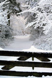 Snow Covered Fence And A Forest Path Stock Image