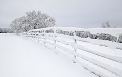 Snow covered fence, tree, and pasture royalty free stock image