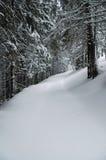 Snow-covered Fichten lizenzfreie stockfotografie
