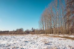 Snow Covered Field and Bare Forest on Sunny Day Royalty Free Stock Photography