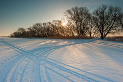 Snow-covered field and bare trees Royalty Free Stock Image