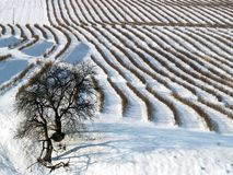 Snow covered field in countryside royalty free stock images