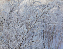 Snow-covered field Royalty Free Stock Photography
