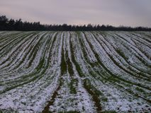 Snow-covered field at the edge of the forest stock photo