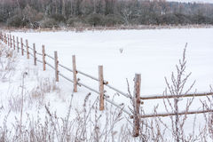Snow-covered field enclosed with a wooden fence. Stock Photography
