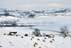 Snow Covered Field and Hills with Sheep Stock Photos