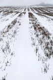 Snow covered field in Kent England. Royalty Free Stock Photos