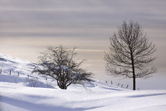 Snow covered field (Spain) Stock Image