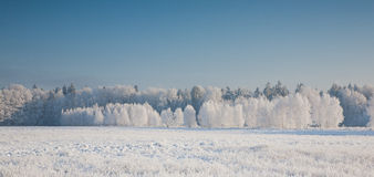 Snow covered field in sun and forest Royalty Free Stock Photography
