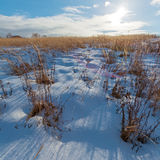 Snow Covered Field and Sun Royalty Free Stock Images