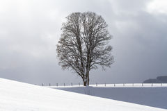 Snow covered field and tree on horizon. Shiny field against blue sky on cold winter day - landscape Stock Images