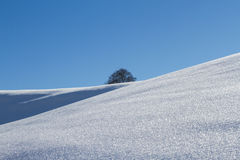 Snow covered field and tree on horizon Stock Photography