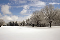 Snow covered field trees and clouds. Trees in a clean, snow covered field with bright blue sky and clouds. Plenty space for copy in the bottom Stock Photo
