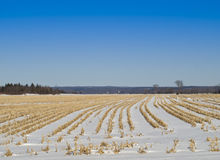 Snow covered field in winter Stock Photography