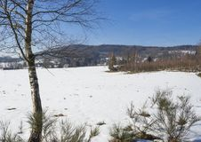 Snow covered field in winter forest with tall birch tree, rural village landscape, sunny day.  stock photography