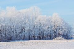 Snow covered fields and forest