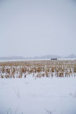 Snow covered Fields Stock Image