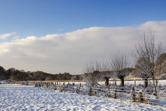 Snow covered fields. Snow covered trees and blue skies with upcoming new snow clouds Stock Images