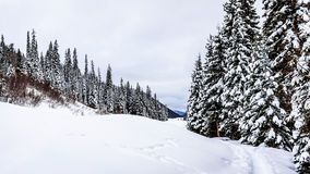 Snow covered fields and trees in the Shuswap Highlands Stock Photo