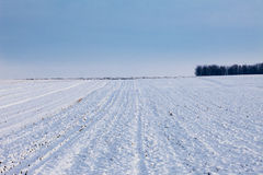 Snow covered fields in winter Stock Image