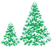 Snow-covered fir. Isolated clip-art / high resolution illustration for your design Royalty Free Stock Images