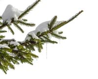 Snow-covered fir branch with icicles  on white background Royalty Free Stock Photos