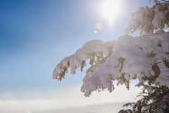 Snow covered fir branch. Snow covered tree branches. Blue sky, mist, mountains in the background blurred. Winter frosty sunny morning or a day in the mountains Royalty Free Stock Photography