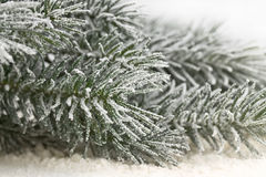 Snow-covered fir branches Stock Photo