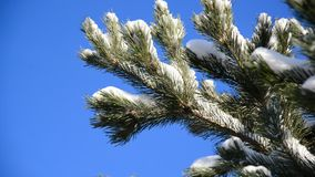 Snow-covered fir branches against  blue sky. Snow-covered fir branches against the blue sky stock footage