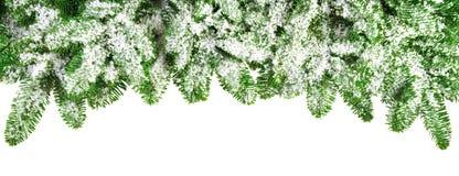 Snow covered fir branches as a border Stock Photo