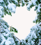 Snow covered fir branches. Christmas tree in snow. Royalty Free Stock Photo