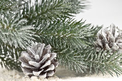 Snow-covered fir branches and cones Stock Photos