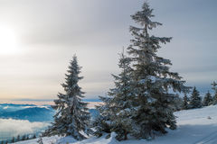 Snow-covered fir on the hillside. Snow-covered fur-tree against the blue sky grows on a hillside royalty free stock photo