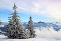 Snow-covered fir on the hillside. Snow-covered fur-tree against the blue sky grows on a hillside royalty free stock photos