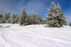 Snow-covered fir in the mountains. Along the ski slopes stock photos