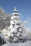 Snow covered fir tree Royalty Free Stock Image