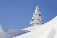 Snow covered fir tree. Blue sky. Winter Stock Photo