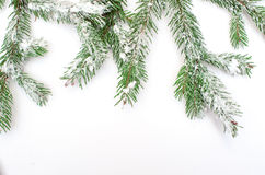 Snow-covered fir tree branch on a white background royalty free stock photo