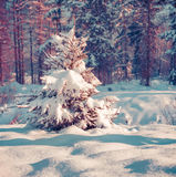 Snow-covered fir tree in the city park. Stock Photos