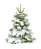 Snow-covered fir tree isolated on white Royalty Free Stock Images