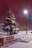 Snow-covered fir-tree in the Park Stock Image