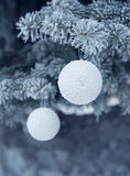 Snow-covered fir tree with toy ball Stock Photography