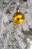 Snow covered fir tree with toy ball. Yellow and golden Christmas ball in real frozen spruce tree Royalty Free Stock Photo