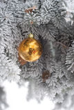 Snow covered fir tree with toy ball. Yellow and golden Christmas ball in real frozen spruce tree Royalty Free Stock Images
