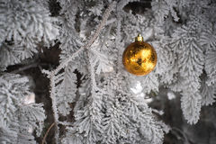 Snow covered fir tree with toy ball. Yellow and golden Christmas ball in real frozen spruce tree Stock Photos