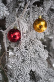 Snow covered fir tree with toys balls. Red yellow and golden Christmas balls in real frozen spruce tree Stock Images
