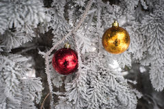 Snow covered fir tree with toys balls. Red yellow and golden Christmas balls in real frozen spruce tree Royalty Free Stock Photo