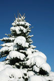 Snow covered fir tree Royalty Free Stock Photos