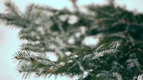 Snow-covered fir tree stock video